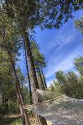 Peaceful Hammock Hanging Among the Pine Trees in a Mountain Retreat. Stock Photos