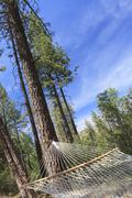 Peaceful Hammock Hanging Among the Pine Trees in a Mountain Retreat. - stock photo