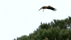 Stock Video Footage of Slow Motion Portugal Stork Crane bird on pole