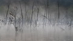 Foggy morning on a lake - stock footage