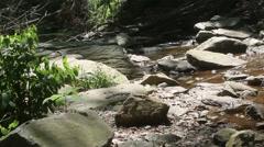 Quiet Stream running through forest Stock Footage