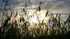 green grass sunset - stock footage