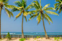 Exotic palm trees on a background of sandy beach Stock Photos