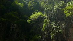 Green bushes and trees on vertical cave side, sunlight and shadow Stock Footage