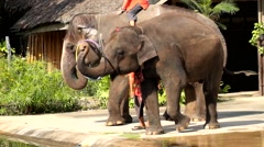 Elephant Show of Thailand. Stock Footage