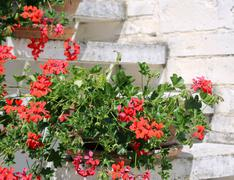 Red Geraniums in the staircase of the Mediterranean House - stock photo