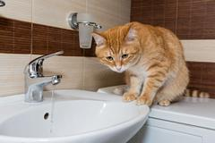 Red  cat interested in water - stock photo