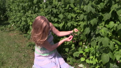 Pregnant woman eats raspberry berry from bush twig in garden Stock Footage