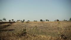 Meeting on dry savanna desert land, long shot, shallow DOF Stock Footage