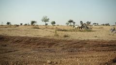 Man on bull cart in dry land India, long shot, shallow DOF Stock Footage