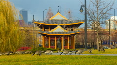 4K time-lapse of geese in Chicago's Chinatown Stock Footage