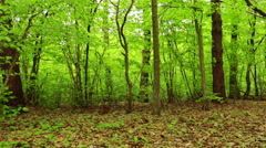 Summer Forest Stock Footage