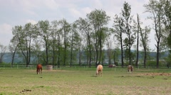 Beautiful horses on the spring pasture on the ranch Stock Footage