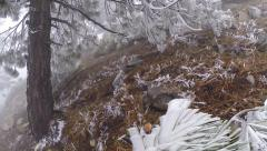 Hoar Frost Forest Stock Footage