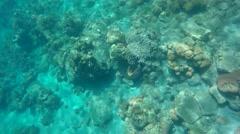 St. Lucia Caribbean Sea 171 underwater scenes at Sugar Beach Pietons Stock Footage