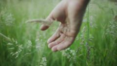 A hand going through a fresh green field of wheat - stock footage