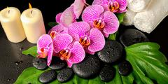 Spa background of zen stones with dew, blooming twig stripped violet orchid ( Kuvituskuvat