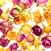 Beautiful dried colorful roses like as background is isolated on white, close - stock photo