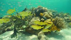 Thriving coral reef with sponge and shoal of fish - stock footage