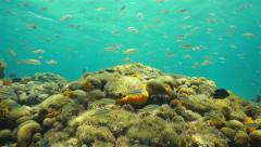 Underwater life school of fish above shallow reef Stock Footage