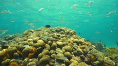 Underwater shoal of fish above a coral reef - stock footage