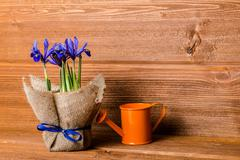 iris flowers in burlap and water can on wooden background, closeup - stock photo
