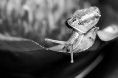Monochrome macro shot of a snail on an exotic plant Stock Photos