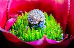 Macro shot of a snail on an colorful exotic plant - stock photo