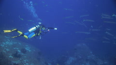 Underwater photographer barracuda picture taking Stock Footage