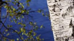 Generic dreamy birch leafes swaying in wind, water waves, birch tree Stock Footage