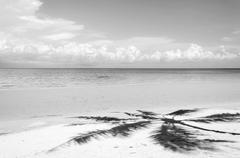 Shadow of palm tree over tropical white sand beach - stock photo