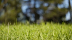 Generic lush meadow, grass swaying in wind, selective focus Stock Footage