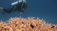 Scuba divers out of focus Stock Footage