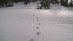 Animal tracks in snow- alternate angle Stock Footage