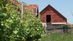 Vineyard in countryside Stock Footage