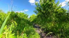 spring landscape. timelapse. - stock footage
