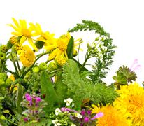 Beautiful wildflowers, chamomiles, milfoil isolated on white Stock Photos