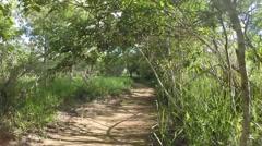 Walking (flying) on brazilian trail Stock Footage
