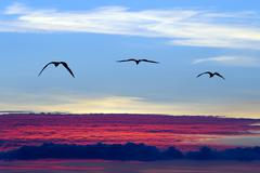 Birds Flying Silhouette Stock Photos