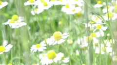 Butterfly fly away from flower - stock footage