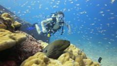 Scuba diver looking at moray eel Stock Footage