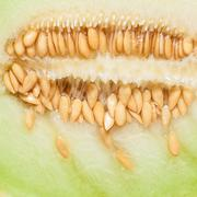 Closeup melon with pips as food background. Stock Photos
