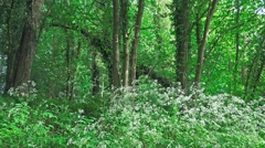 English countryside Lush green trees and undergrowth 1 Stock Footage