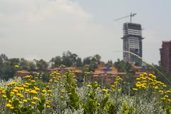 Flowers and Buildings - stock photo