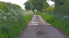 English country lane lush green hedgerow and trees 2 Stock Footage
