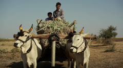 Village farmer man and boy on bull cow cart, medium shot Stock Footage
