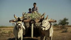 Village farmer man and boy smiling on bull cow cart, medium shot - stock footage