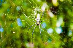Large tropical spider in the web - stock photo