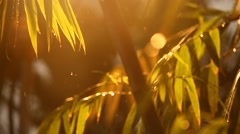 Rain water in the garden Stock Footage