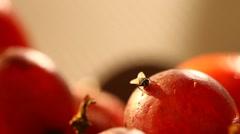 Flies eat food Stock Footage